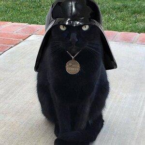 darth kitti